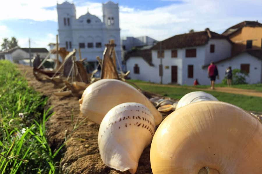 Shells-for-sale-by-Galle-Mo